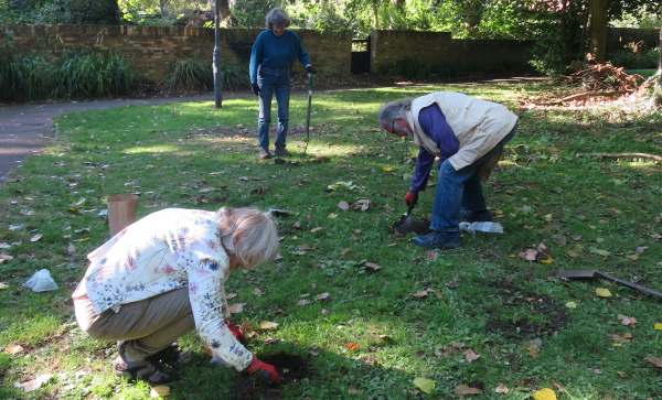 Volunteers Planting Bulbs