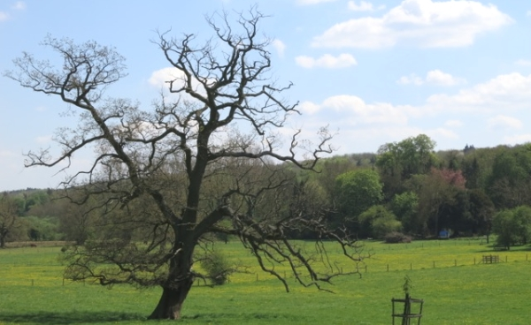 View on the Chess Valley Walk