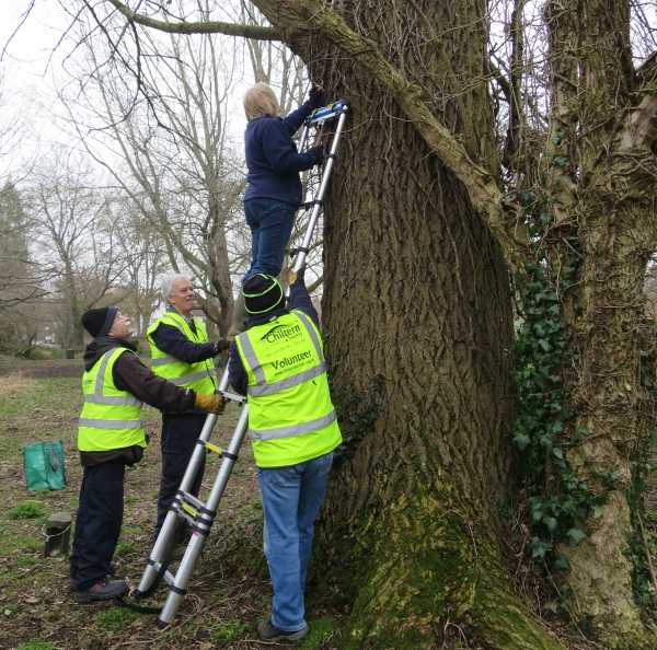 Installation of a Bird Box at Wright's Meadow