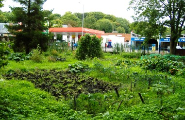 Amersham Road Allotments