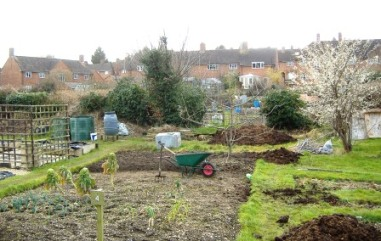 Asheridge Road allotments in Spring