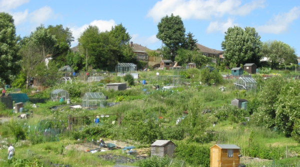 Cameron Road Allotments